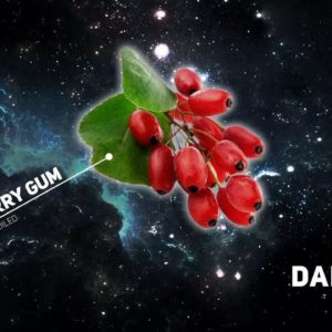 Dark Side Barberry Gum 100 гр Core