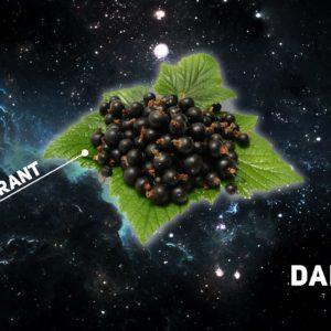 Dark Side Blackkurant 100 гр Core
